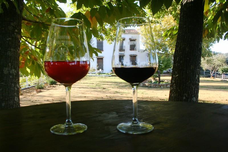 Vinos Fuente Fría (15)